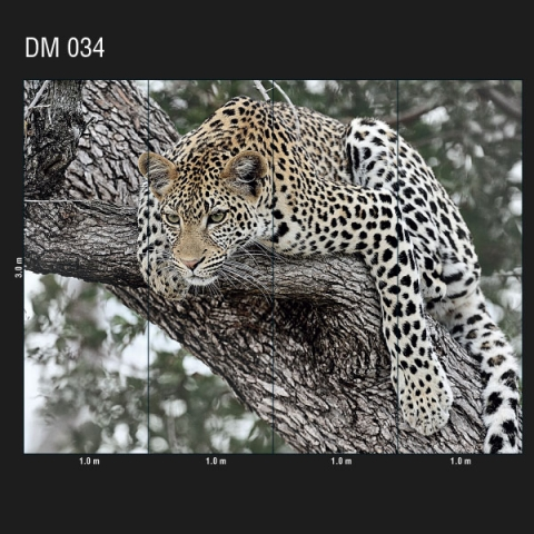 DM 034